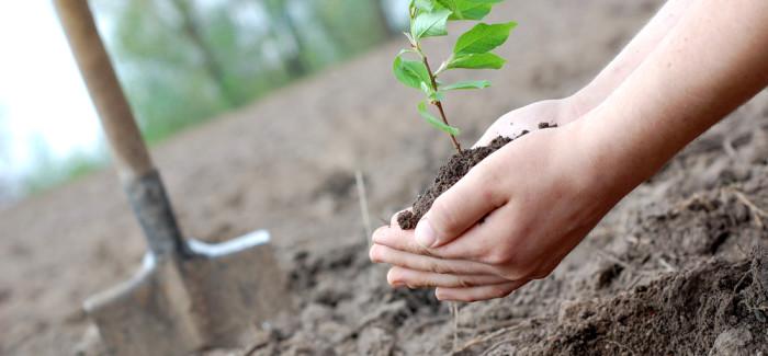 Stellenbosch Tree-a-thon gains momentum